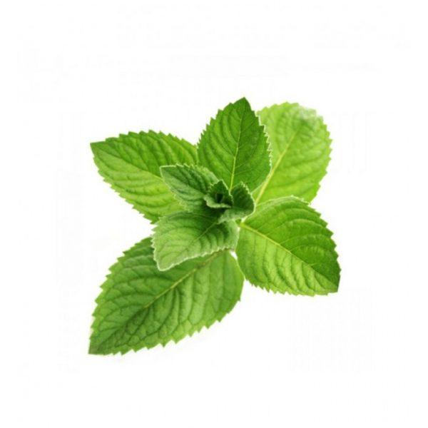 Мята свежая зелёная, 100 г